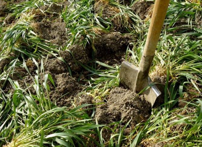 Ганичкина, работа в саду и стимулятор роста. ч.1