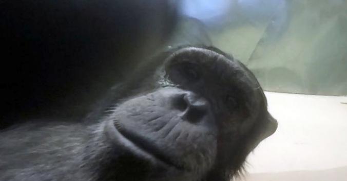 Забрать гранату у обезьяны. как...